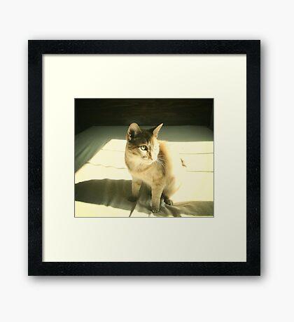 mew. Framed Print