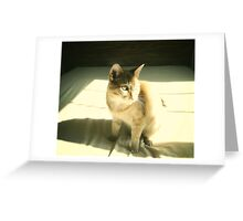 mew. Greeting Card
