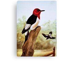 Red Headed Woodpecker Art Canvas Print