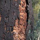 Bark - 7 by stellaclay