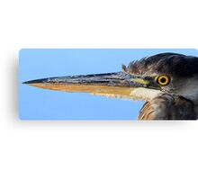 "The ""Great Blue Heron"" Canvas Print"