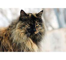 Kitty's Winter Coat Photographic Print