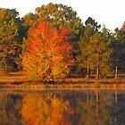 Cox Lake Reflection by Richard Lawry