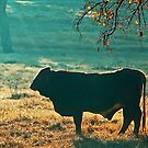 Bull Silhouette by Nick Conde-Dudding
