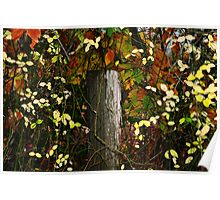 fall fencepost Poster