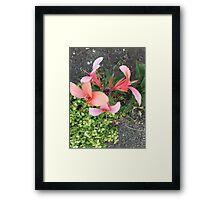 Dancing Peach Framed Print