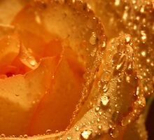 Diamonds and Gold by Barbara  Brown