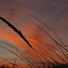 Sunset in the Dunes by Bevellee