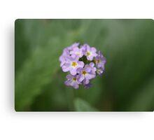 Mauve Flower Canvas Print