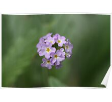 Mauve Flower Poster