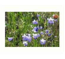 """Harebells"" -Prairie Wildflower Series Art Print"