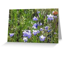 """Harebells"" -Prairie Wildflower Series Greeting Card"