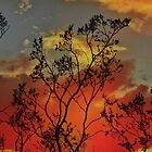 Against a Fiery Sky by Barbara  Brown