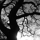 Morning Tree Silhouette by funkybunch
