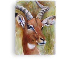 Impala's Soul Canvas Print