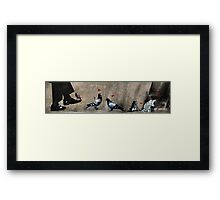 Cat, frog and pigeons Framed Print