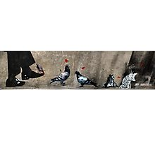 Cat, frog and pigeons Photographic Print