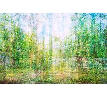 Average Forest  Photographic Print