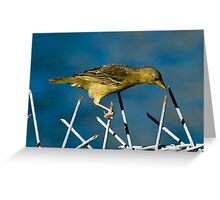Barbed Wire Weaver Greeting Card