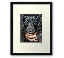 huge puppy Framed Print
