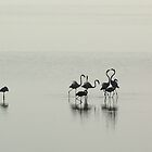 Pink Flamingos at Dawn by Selsong