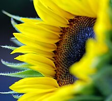 Catching the Sun by Renee Hubbard Fine Art Photography