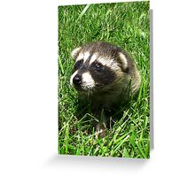 Babby Raccoon Greeting Card