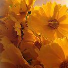 Sunny day 4 you. by © Andrzej Goszcz,M.D. Ph.D