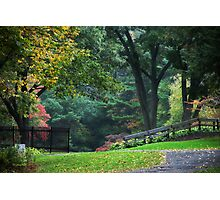 Walk in the Park Landscape Photographic Print