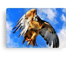Red Tailed Hawk North Wind Canvas Print