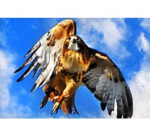 Red Tailed Hawk North Wind Photographic Print