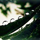 Rain peas!! by kgphoto