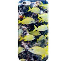 Yellow Caribbean Reef Fish on a Bahamas Reef iPhone Case/Skin