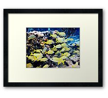Yellow Caribbean Reef Fish on a Bahamas Reef Framed Print