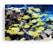 Yellow Caribbean Reef Fish on a Bahamas Reef Canvas Print