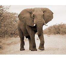 big elephant Photographic Print