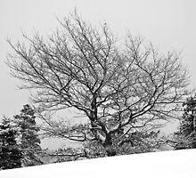 Winter Wonderland by Curtis  Sheppard