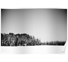 Black and White Nature Poster