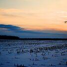 Snow Farm by Trenton Purdy