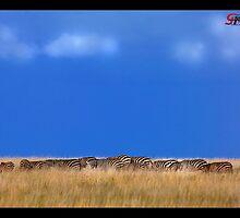 Zeebras Hiding by capturedjourney