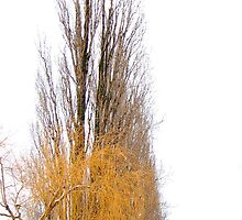 Weeping willow and plane by kilmann
