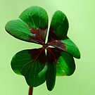 Irish Luck by Rowan  Lewgalon