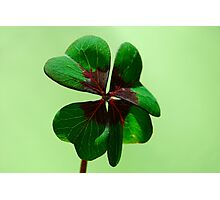 Irish Luck Photographic Print