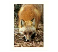Foxy Man Art Print