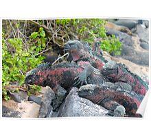 Iguana Pile Poster