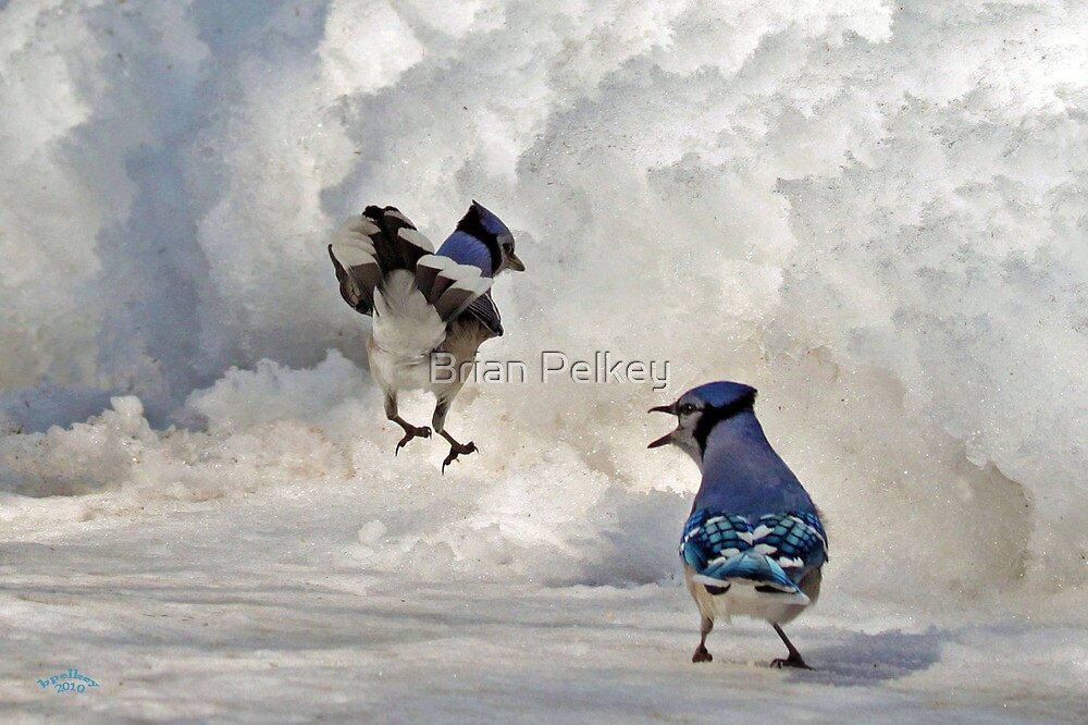 When I Say Jump!!! by Brian Pelkey