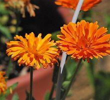 Oh the orange by John Easterhouse