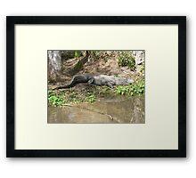 Gator Chillin' Framed Print