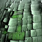 Cracked Green by Orest Macina