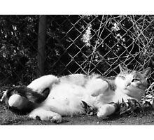 The Tail Strangler  Photographic Print